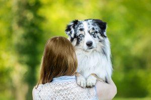 Australian Shepherd, blue merle, Rudelfotografie, Mensch-Hund-Fotografie - Portraitfotografie, Hundefotografie und Tierfotografie in Potsdam und Berlin - Sophia Zoike Photography