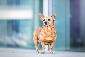 Mischling, Stadtshooting - Hundefotografie und Tierfotografie in Potsdam und Berlin - Sophia Zoike Photography