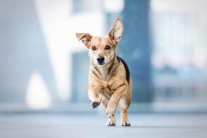 Mischling, Stadtshooting, Actionshoot, Berlin - Hundefotografie und Tierfotografie in Potsdam und Berlin - Sophia Zoike Photography