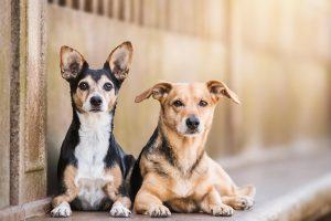Mischling, Stadtshooting, Berlin - Hundefotografie und Tierfotografie in Potsdam und Berlin - Sophia Zoike Photography