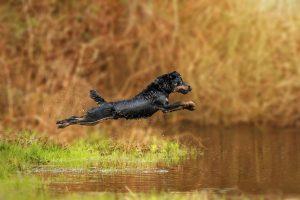 Deutscher Jagdterrier, Wasser, Actionshoot - Hundefotografie, Tierfotografie und Hundesportfotografie in Potsdam - Sophia Zoike Photography