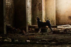 Appenzeller Sennenhund, Trümmersuche, Rettungshunde - Hundefotografie, Hundesportfotografie, Tierfotografie in Potsdam und Berlin - Sophia Zoike Photography