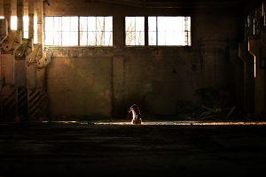 Australian Shepherd, Rettungshund, Trümmersuche, Hundesport - Hundefotografie, Hundesportfotografie, Tierfotografie in Potsdam und Berlin - Sophia Zoike Photography