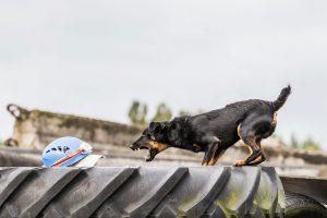 Deutscher Jagdterrier Rettungshund Trümmersuche - Hundefotografie, Hundesportfotografie, Tierfotografie in Potsdam und Berlin - Sophia Zoike Photography